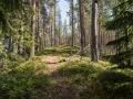 Skog_o_Vatten-4_MThorsbrink